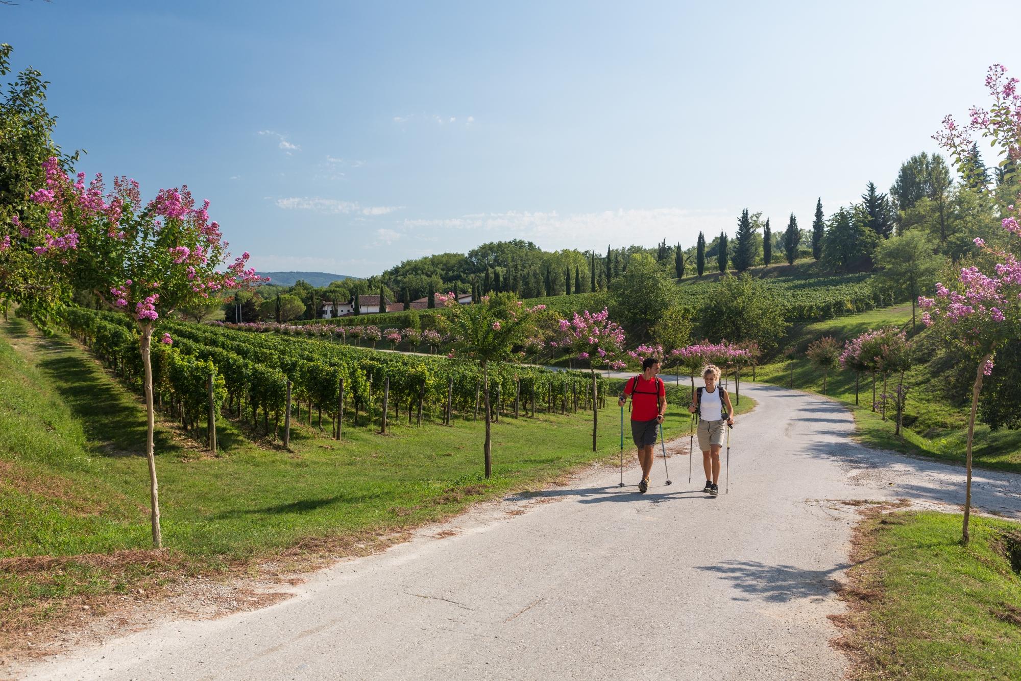 Trekking Alpe Adrai Trail - Tappa attraverso i paesaggi del Collio, in Friuli Venezia Giulia