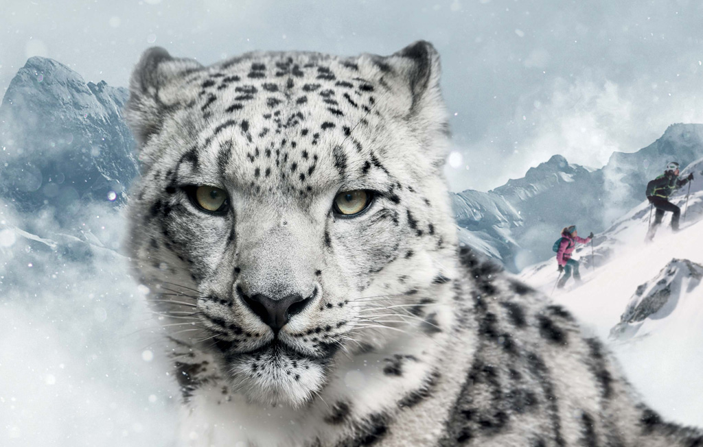 Dynafit Snow Leopard Day