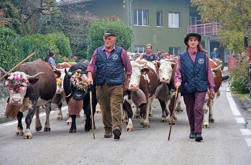 Desnalpà, festa della discesa delle mandrie dagli alpeggi