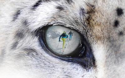 Snow Leopard Day 2020: sciare per una buona causa