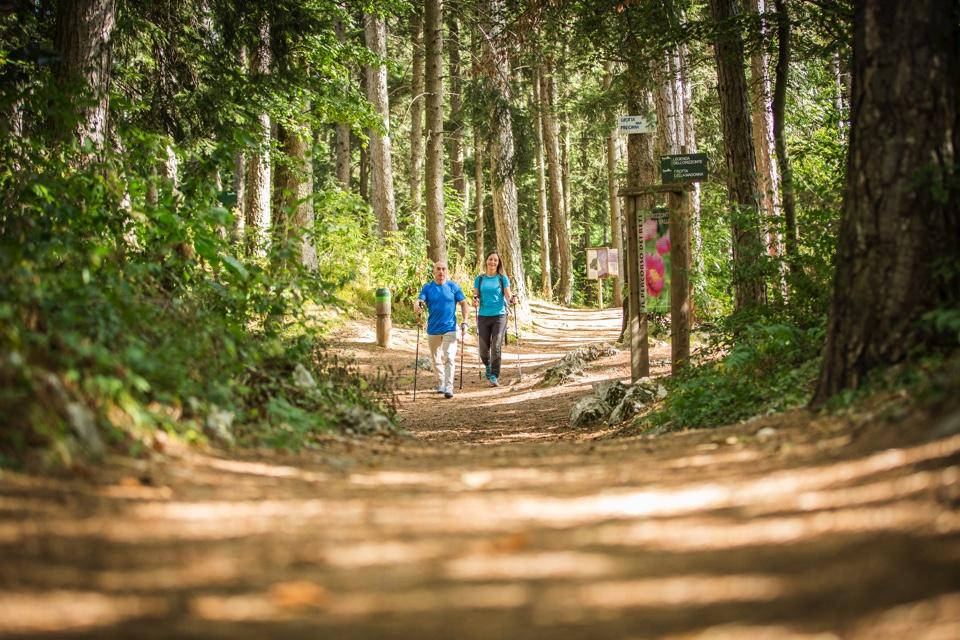 Il parco del respiro in Paganella: benessere camminando tra gli alberi