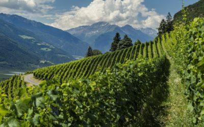 I Sentieri del vino in Alto Adige: 5 percorsi guidati nella natura
