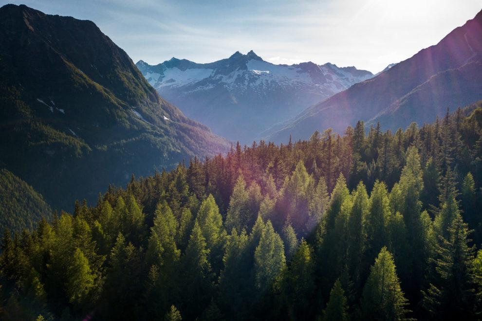 Selvatiq bevande alpine