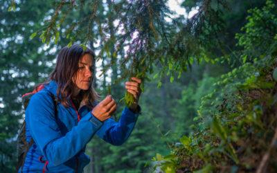 Selvatiq, bevanda al sapore di montagna: avete mai bevuto un albero?