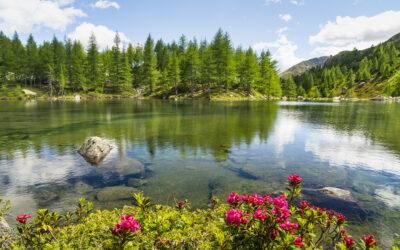 Val Grosina Trail: test in vista dell'edizione 2022