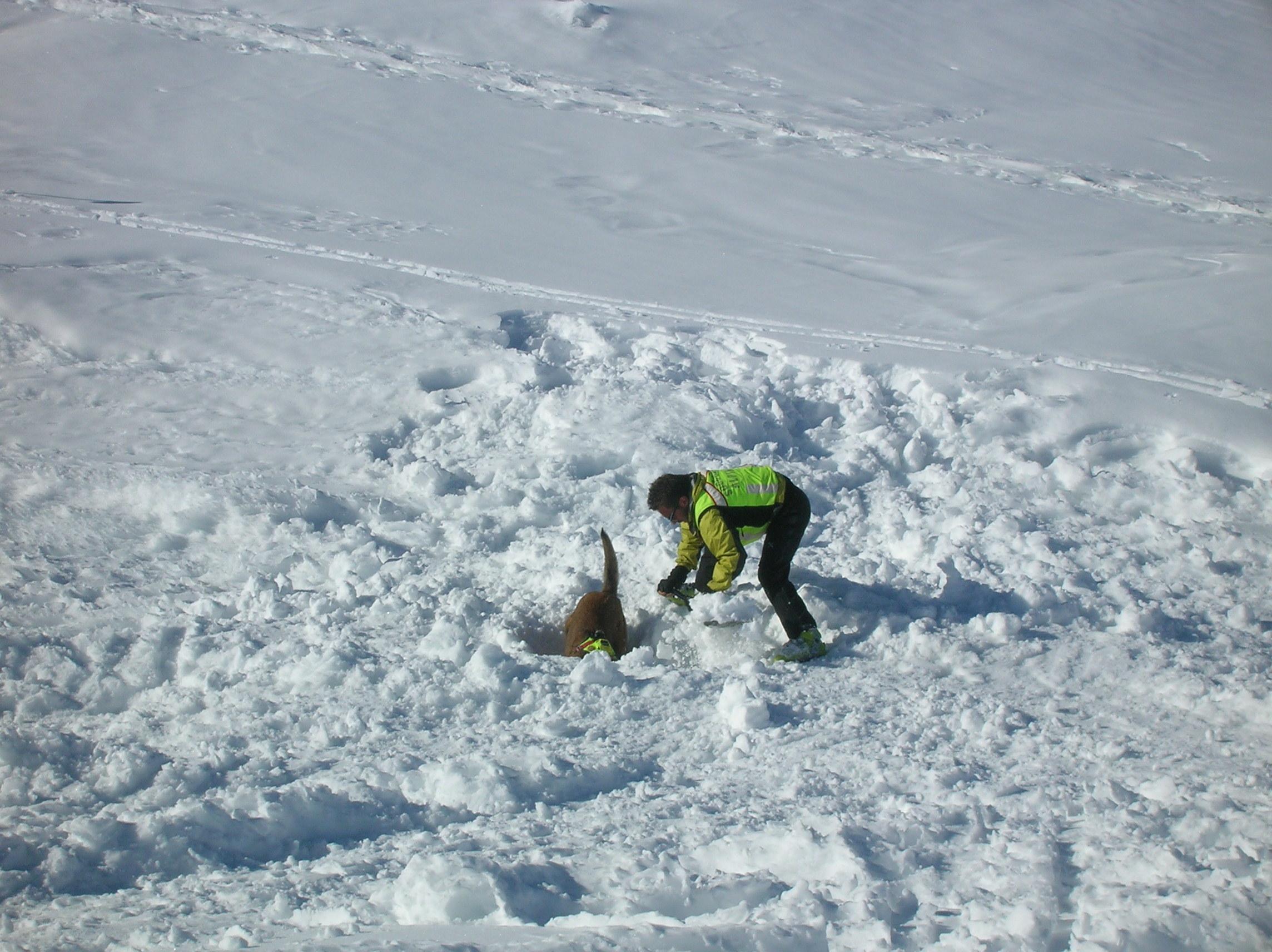Sul ghiacciaio Presena il 46° Corso nazionale di cani da valanga