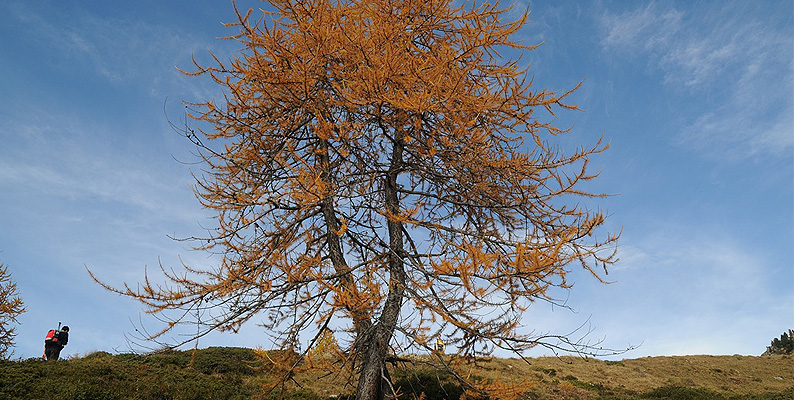 Foliage Giroparchi 2014