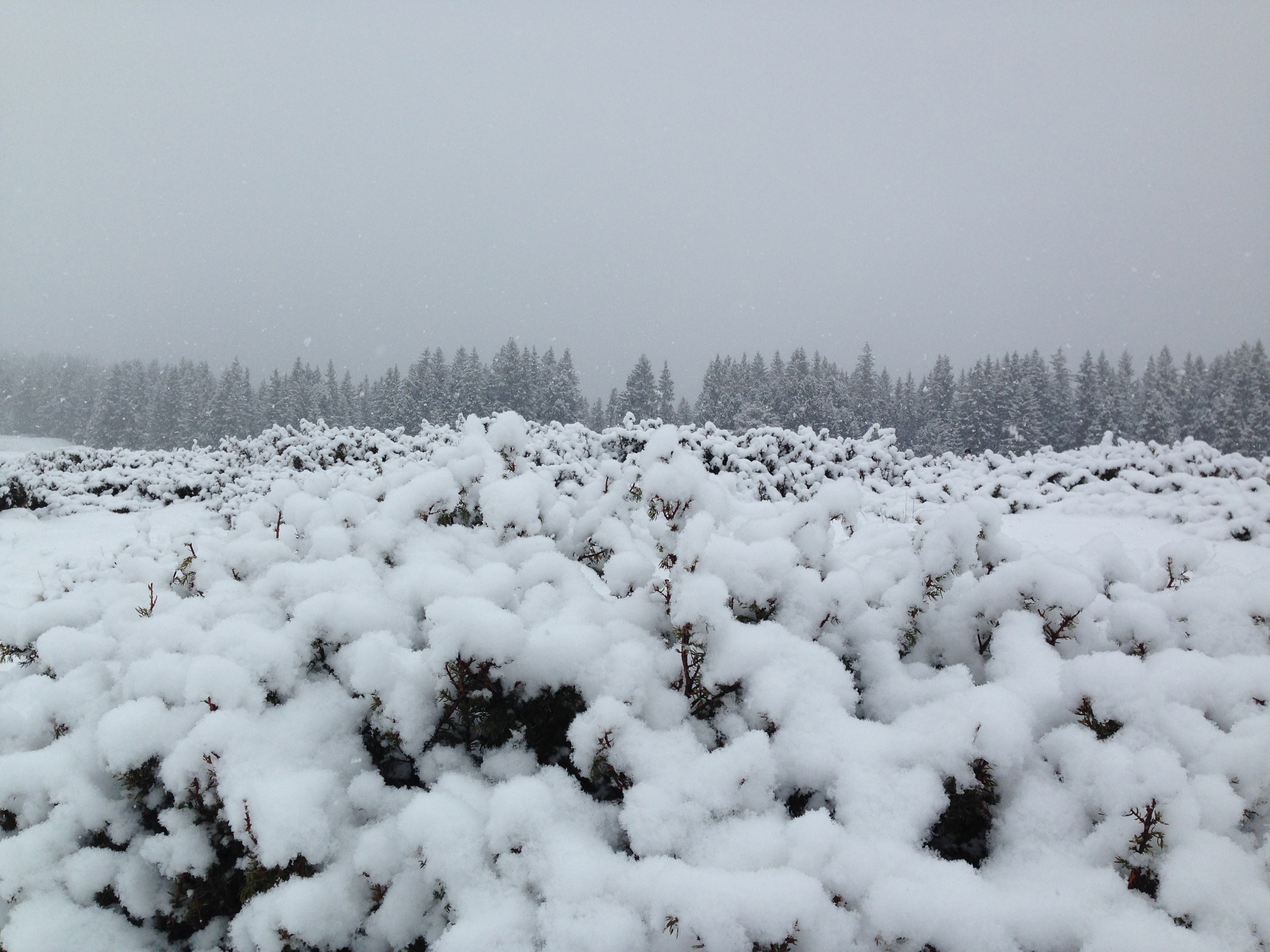 Val di Fiemme: sconti sulla neve fresca