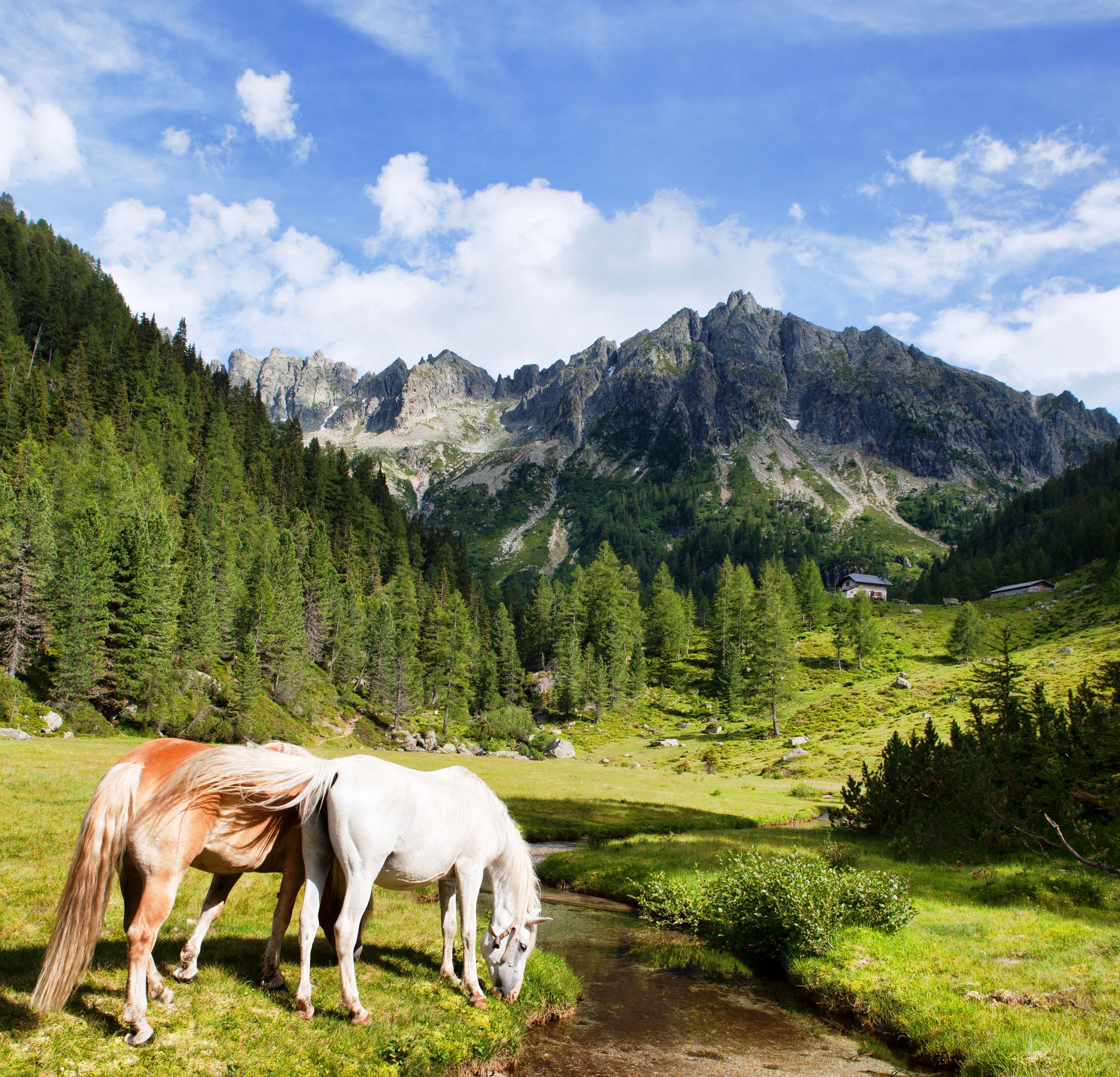 Trekking con l'Autore 2012, ouverture con Erri De Luca