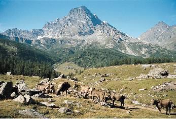 Si carichino le bestie in Alpe