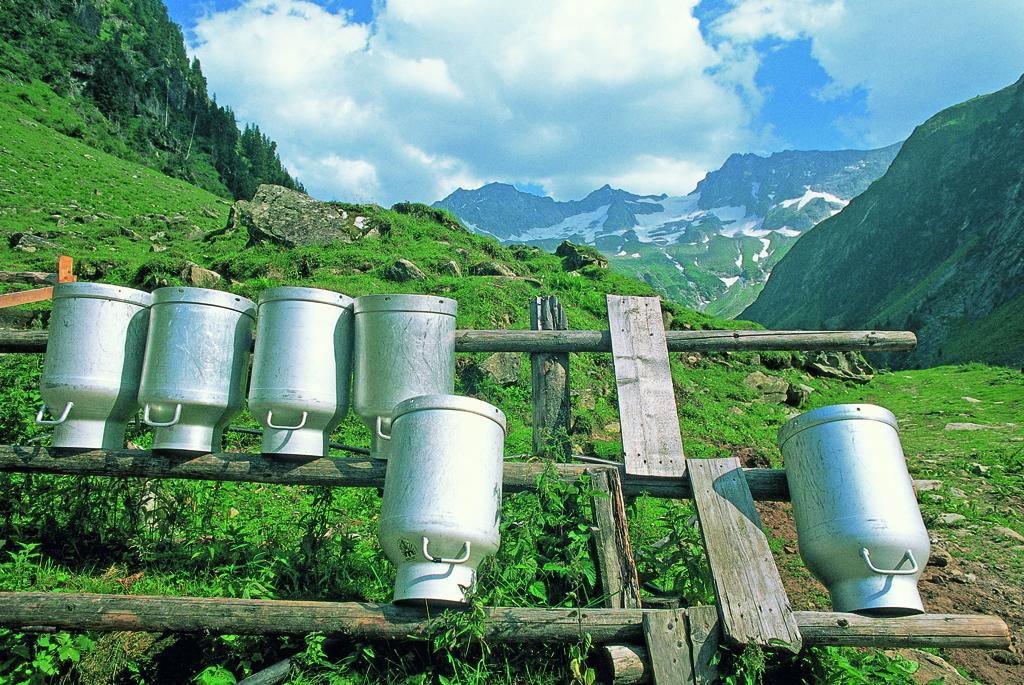 Itinerari del gusto tirolesi: il formaggio Heumilchkäse della Zillertal