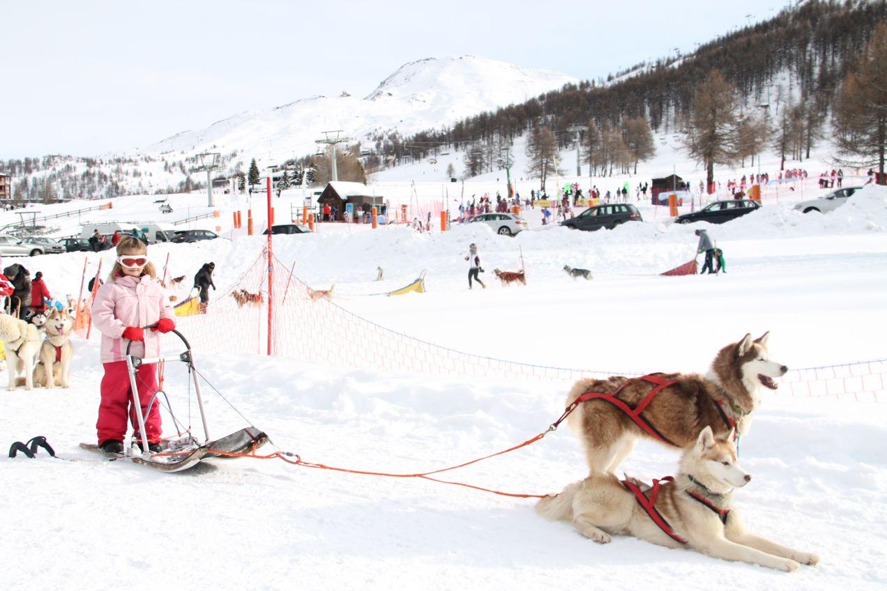 Gita in slitta con i cani al Centro Sleddog Sestriere