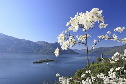 In Ticino, tra parchi, giardini e panorami mozzafiato